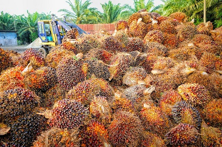 Prospect of Palm Oil Prices